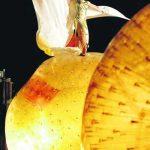 Kulturevents mit Zorbs®